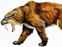 Photo de Smilodon