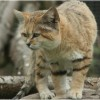 Photo de Sandcat