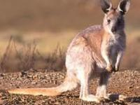 Photo de Wallaroo