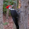 Photo de Woodpecker