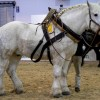 Photo de Percheron