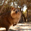 Photo de Quokka